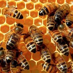 Apiterapia: la sanación a través de las abejas.